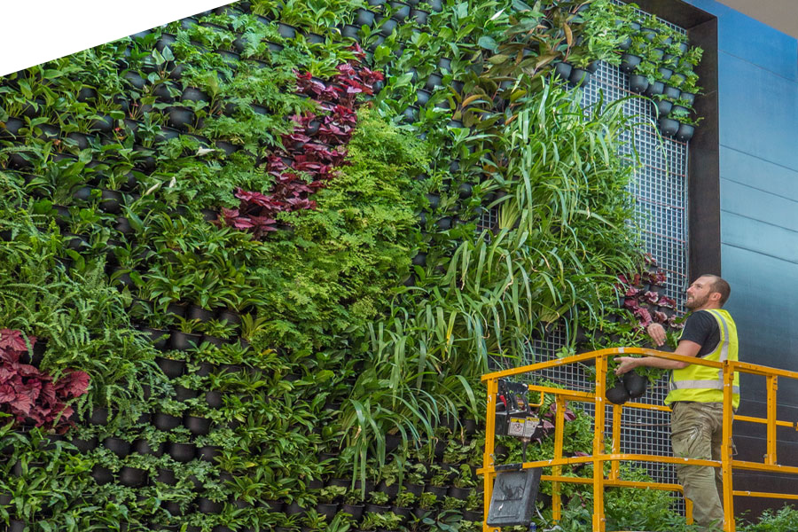 Creating Vertical Gardens